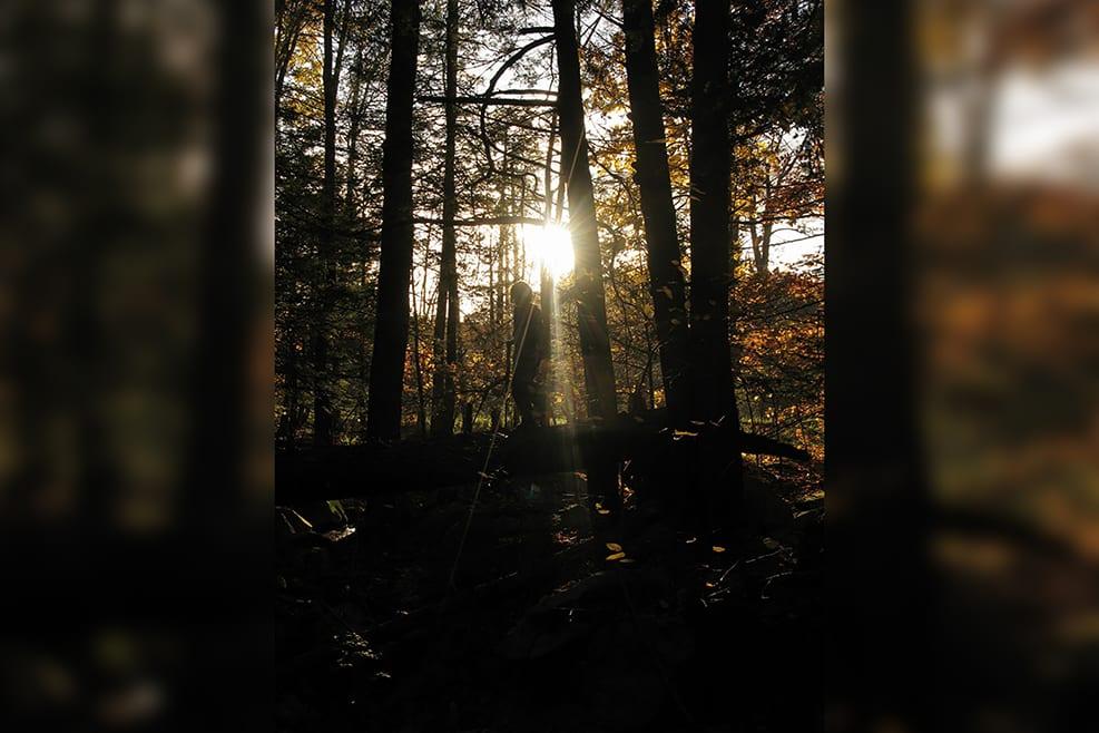 Fall_11-verticalblurrybkg