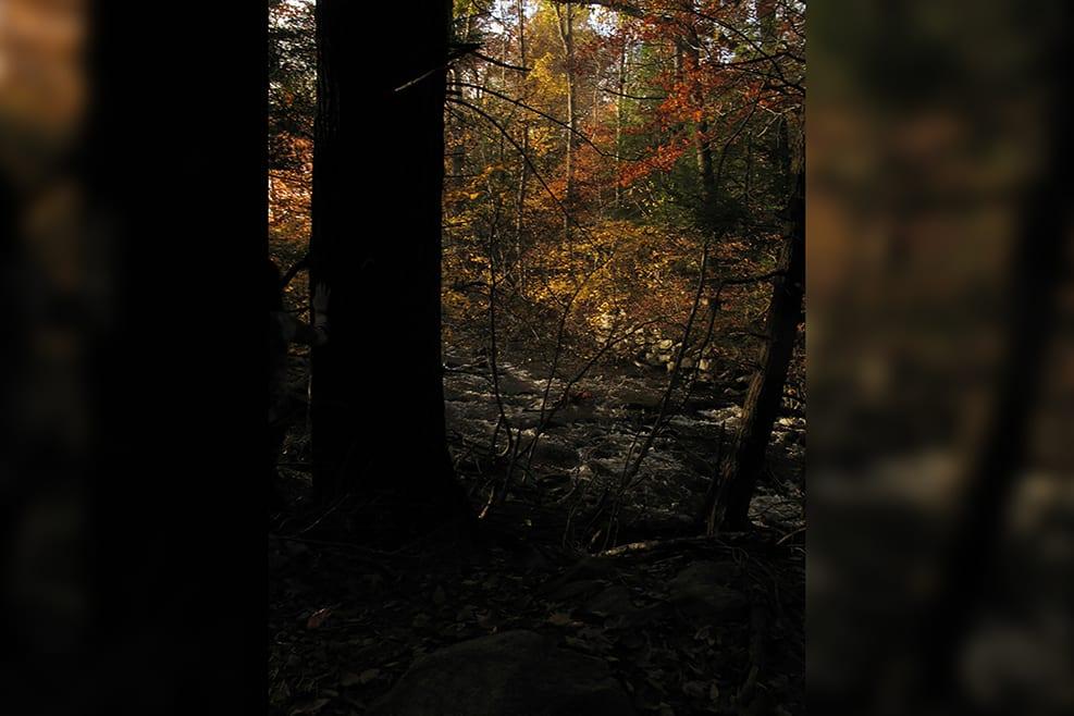 Fall_13-verticalblurrybkg