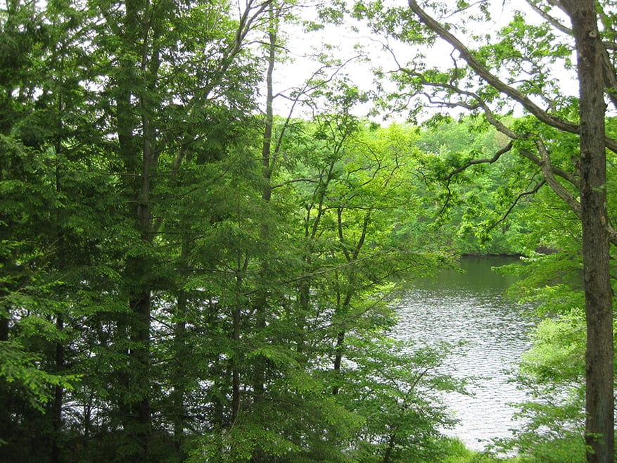 Spring trees (2)