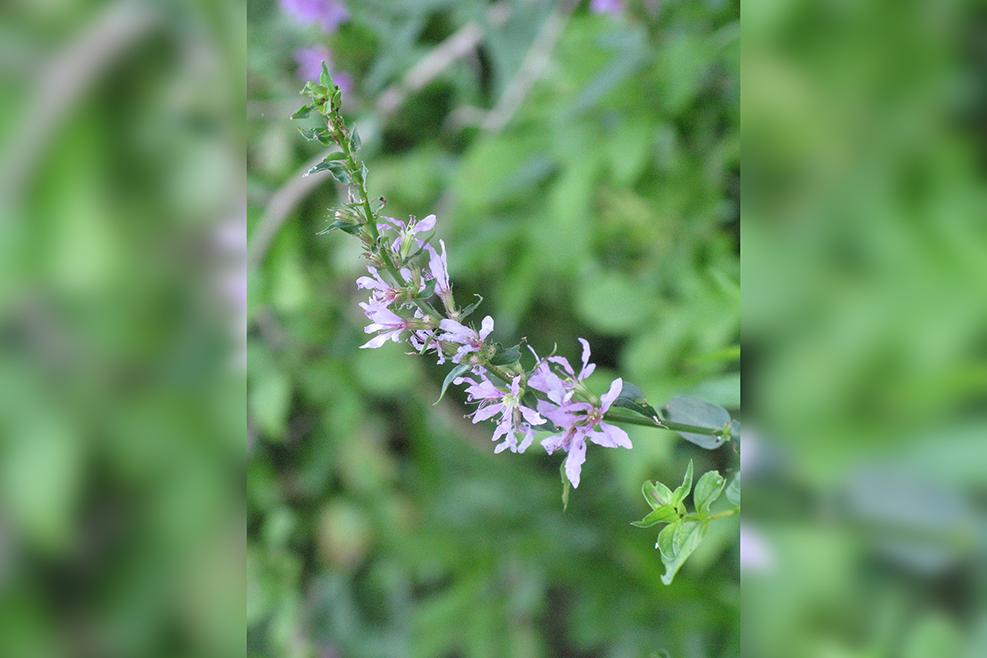 Summer Flower2 (2)-blurrybackground